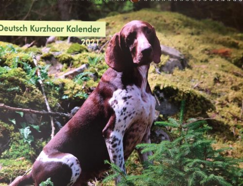 Shop: Deutsch Kurzhaar Kalender 2021!